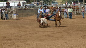 Rodeo Cowboys - Bulldogging Steer Wrestling in Slow Motion - Clip 3 of 9 stock video