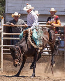 Rodeo Day Stock Photography