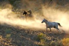 Rodeo del caballo Foto de archivo libre de regalías