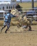 Rodeo del paseo de Bull Fotos de archivo