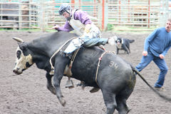 Rodeo della valle di Nicola Fotografie Stock