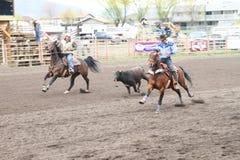 Rodeo della valle di Nicola Immagini Stock