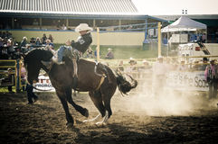 Rodeo en cowboys Stock Afbeeldingen