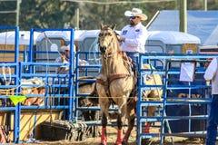 Rodeo för 2018 FAWE Arkivfoton