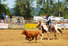 Rodeo Fun. Calf roping competition at the NPRA Yoncalla Rodeo held the weekend of the 4th of July, 2009.  Yoncalla, Oregon is a small rural town located in Royalty Free Stock Image