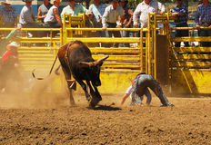 Rodeo Fun. Bull riding competition at the NPRA Yoncalla Rodeo held the weekend of the 4th of July, 2009.  Yoncalla, Oregon is a small rural town located in Stock Images