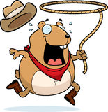 Rodeo Hamster Royalty Free Stock Images