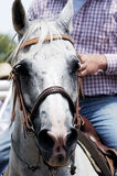 Rodeo Horse. Ready to perform Royalty Free Stock Images