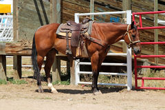 Rodeo Horse Royalty Free Stock Image