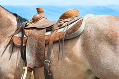 Rodeo horse details. Horse prepared for a rodeo event Royalty Free Stock Images