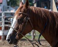 Rodeo horse Stock Photos