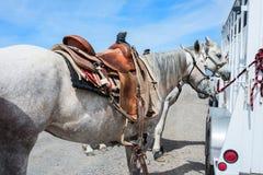 Rodeo horses Royalty Free Stock Photo