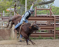 Rodeo Kicker. Event:  2016 O'ahu High School Student Rodeo Stock Photography