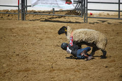 Rodeo Kids Sheep Riding. Kids Rodeo, Sheep riding event also known as Mutton Bustin in Santa Barbara, CA August 2013 Old Spanish Days Fiesta Royalty Free Stock Image