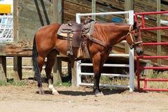 Rodeo koń obraz royalty free