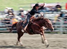 Rodeo: Ladies Barrel Racing Stock Photography