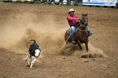 Rodeo - Lassoing de Koe Royalty-vrije Stock Foto's