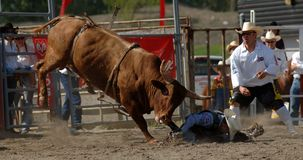 Rodeo: Lucha de Bull Fotos de archivo