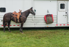 Rodeo lufowy koń Fotografia Stock