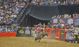 Rodeo. Man on a bull in the San Antonio rodeo,  February 2014 Royalty Free Stock Image