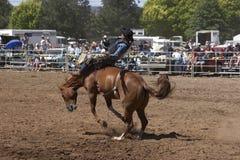 Rodeo-Mitfahrer Lizenzfreie Stockfotografie