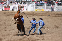 Rodeo Moment Stock Images