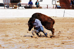 Rodeo in the mud. A cowboy throws a steer in a muddy rodeo arena Royalty Free Stock Photography