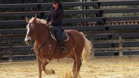 Rodeo, Paarden, Landbouwbedrijfdieren stock videobeelden