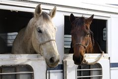 Rodeo-Pferde Lizenzfreie Stockfotos