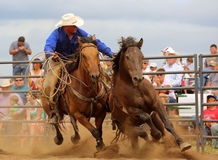 Rough Stock Rodeo Pickup Man royalty free stock photo