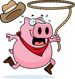 Rodeo Pig Stock Images