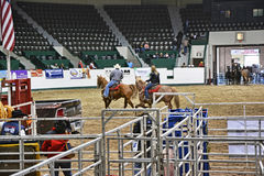 Rodeo Prep Royalty Free Stock Image