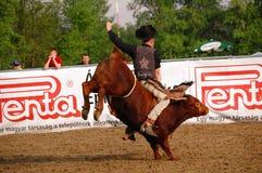 Rodeo przedstawienie Zdjęcia Royalty Free