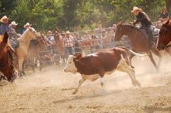 Rodeo przedstawienie Fotografia Stock