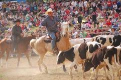Rodeo przedstawienie Zdjęcia Stock