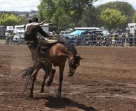 Rodeo Rider. Rider coming off his horse Stock Photography