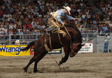 Rodeo: Saddle Bronc Stock Image