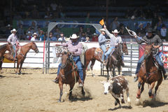 Rodeo, Santa Barbara, CA Royalty Free Stock Photography