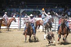 Rodeo, Santa Barbara, CA. Cowboy during Old Spanish Days, Fiesta in Santa Barbara August 2013 Royalty Free Stock Photography