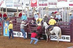 Rodeo scene. Stock Photos