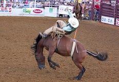 Rodeo scene. Royalty Free Stock Image