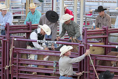 Rodeo scene. Stock Image