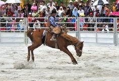rodeo show Zdjęcia Stock