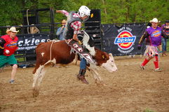 Rodeo show Royalty Free Stock Images