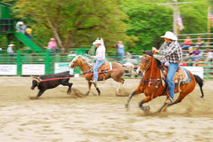 Rodeo South. Team roping at the Myrtle Creek South Douglas Rodeo in early June Stock Images
