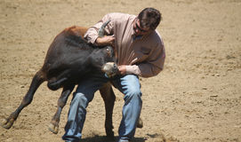 Rodeo Steer Wrestling Stock Images