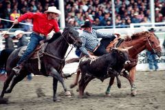 Rodeo: Team Roping Stock Images