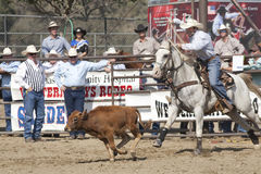 Free Rodeo Tie Down Roping Stock Image - 16324681