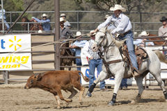 Rodeo Tie Down Roping Royalty Free Stock Photography