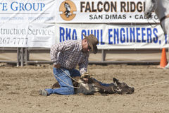 Rodeo Tie Down Roping Stock Image
